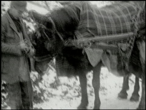vidéos et rushes de [amateur film: ice harvest, pocono manor, 1919] - 5 of 10 - 1910 1919