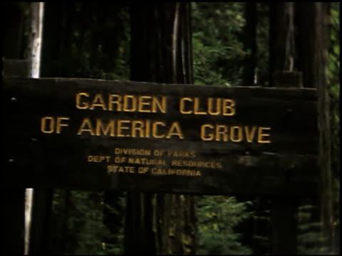 vídeos de stock, filmes e b-roll de [amateur film: redwoods and dude ranch] - 1 of 11 - sequoia sempervirens