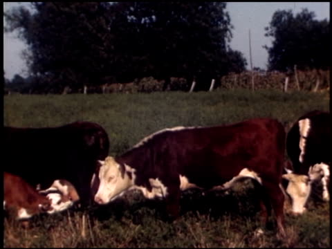 [amateur film: texas farm family] - 6 of 11 - altri spezzoni di questa ripresa 2056 video stock e b–roll