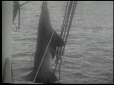 [amateur film: 'with rod and harpoon to the enchanted land of sport,' january 1930, part i] - 1 of 6 - harpoon stock videos and b-roll footage