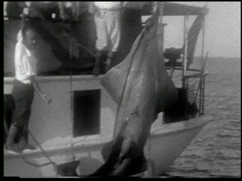 [amateur film: 'with rod and harpoon to the enchanted land of sport,' january 1930, part i] - 2 of 6 - harpoon stock videos and b-roll footage