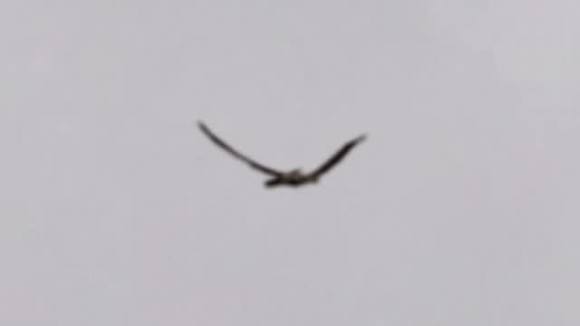 amateur footage showing a supposed pterosaur recently flying over boise, idaho, usa. is it the work of video editing, or perhaps the return of the... - take that stock videos & royalty-free footage
