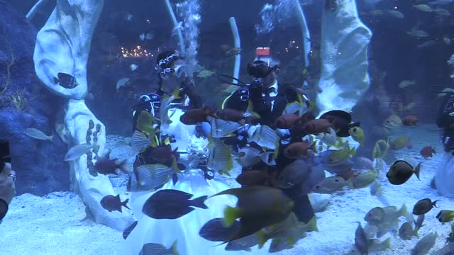 amateur scuba divers lisa huggins and chris jackson tied the knot in a giant tropical oceanarium in what is believed to be among the uk's first... - aqualung diving equipment stock videos & royalty-free footage