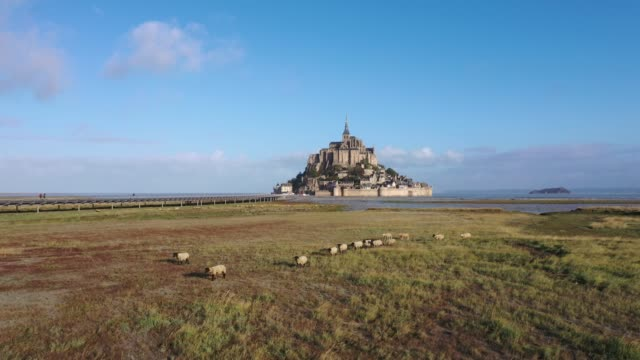 vidéos et rushes de amazing aerial view of the sheeps at mont saint-michel - mouton