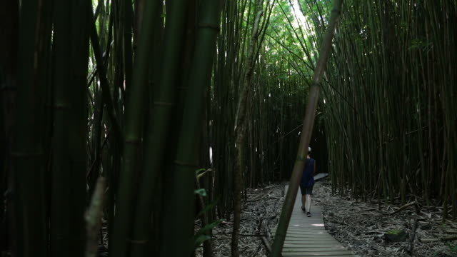 amazing bamboo forest, maui, hawaii - bamboo shoot stock videos & royalty-free footage