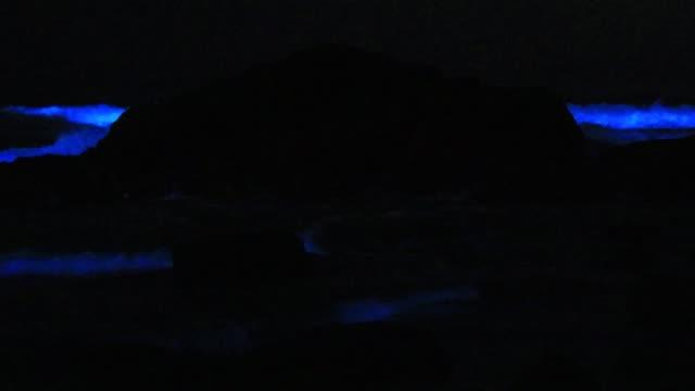 amazing bioluminescent tide makes blue glowing splashes on rocks on the beach in la jolla, calfornia - プランクトン点の映像素材/bロール