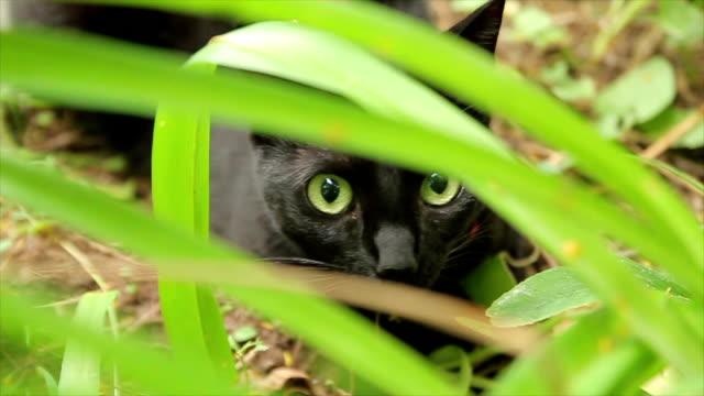 vidéos et rushes de regard d'yeux de chat étonnant à la caméra - type de chasse