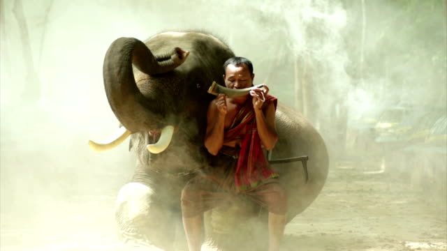 amazing mahout with elephant - elephant seal stock videos & royalty-free footage