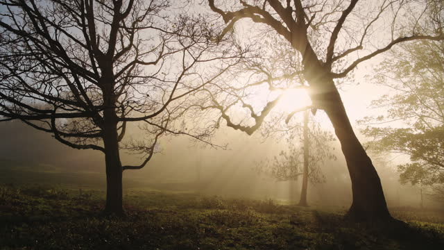 amazing nature forest and woods landscape scenery with trees in misty foggy weather, bright orange sun beam of mist and fog at sunrise with sunbeams in the woodlands, the cotswolds, england, uk - bare tree stock videos & royalty-free footage