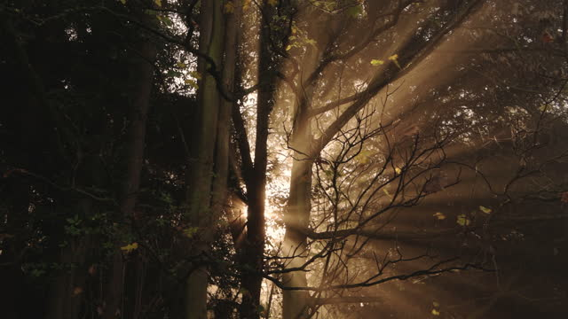 amazing nature forest and woods landscape scenery with trees in misty foggy weather, bright orange sun beam of mist and fog at sunrise with sunbeams in the woodlands, the cotswolds, england, uk - beauty in nature stock videos & royalty-free footage