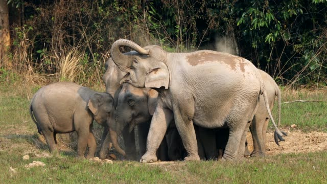 Amazing of Group asian elephants in the forest