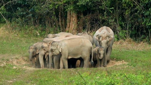 Erstaunlich, der Gruppe des asiatischen Elefanten, Slow-motion