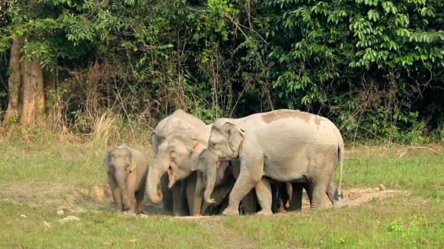 erstaunlich, der gruppe des asiatischen elefanten, slow-motion - tierische nase stock-videos und b-roll-filmmaterial