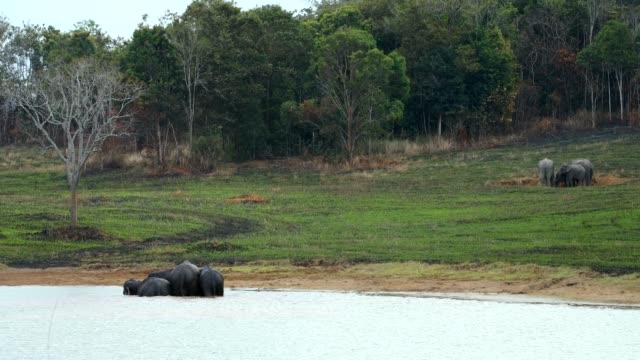 Amazing of Group asian elephants