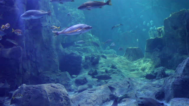 amazing view of huge fish aquarium - aquatic organism stock videos & royalty-free footage