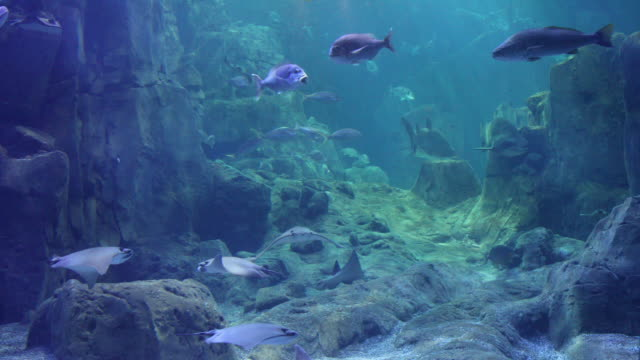 amazing view of huge fish aquarium - aquarium stock videos & royalty-free footage