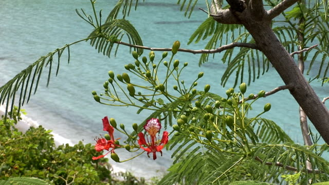 Amazing view of St Barth with tropical pink flowers