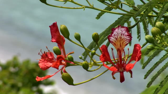amazing view of st barth with tropical pink flowers - st lucia stock videos & royalty-free footage