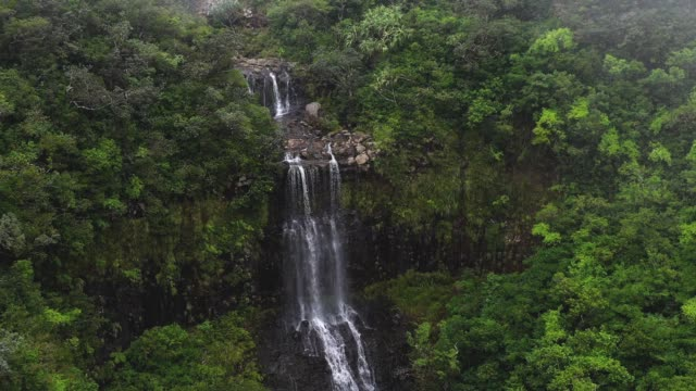 Erstaunliche wilde Natur in Mauritius Island, tropische Bäume und Wald