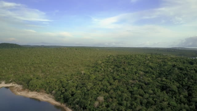 Amazon forest by the Tapajos River, Pullout