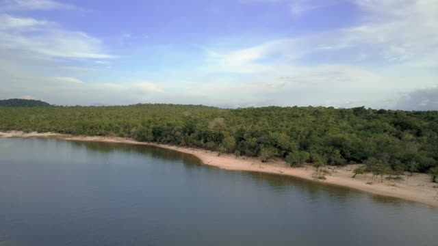 Amazon forest by the Tapajós River, Pará