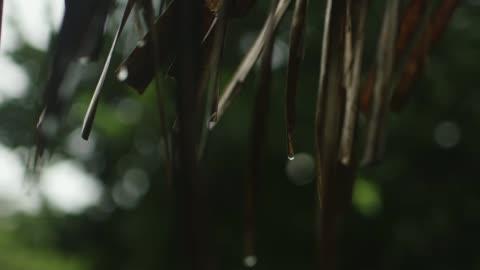 amazon guajajara tribe combat illegal poaching through modern technology; brazil, maranhao; guajajara men watching laptop, guajajara women and... - headdress stock videos & royalty-free footage