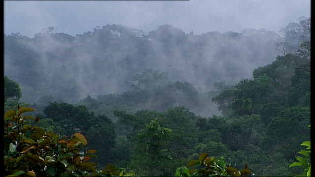 the amazon basin amazonas ext good shots of canopy of rain forest showing tops of trees as mist rises from the trees and birds heard whistling - whistling stock videos & royalty-free footage