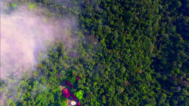 amazon rainforest  - aerial view - south america stock videos & royalty-free footage