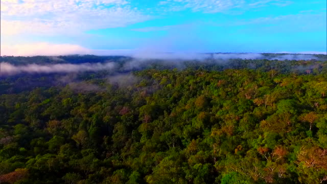 amazon rainforest  - aerial view - environmental conservation stock videos & royalty-free footage
