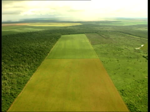 Amazon Rainforest and deforestation Vars air views of sections of rainforest coming to an abrupt stop at edge of cleared areas of land result of...