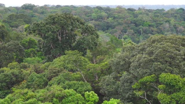 amazon rainforest and river - brasilien stock-videos und b-roll-filmmaterial