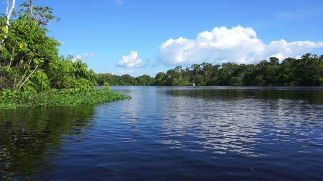 Amazon rainforest and river