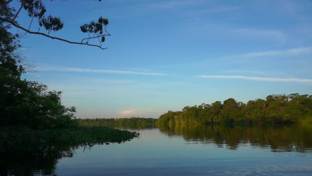 amazon rainforest and river - silvestre stock videos & royalty-free footage