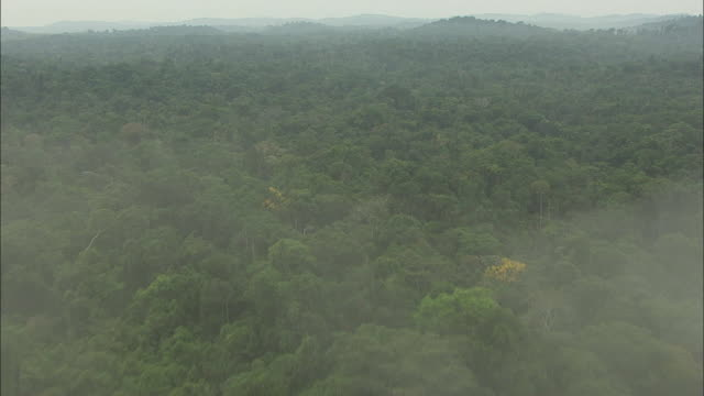 Amazon rainforest over fog