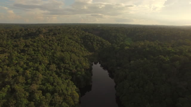 vídeos de stock, filmes e b-roll de aerial  amazon rainforest - horizontal