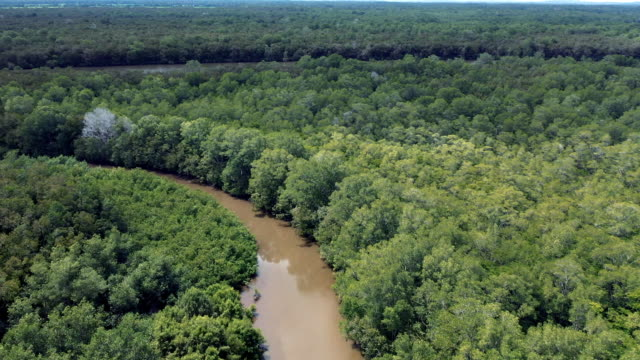 amazon river aerial - brazil stock videos & royalty-free footage