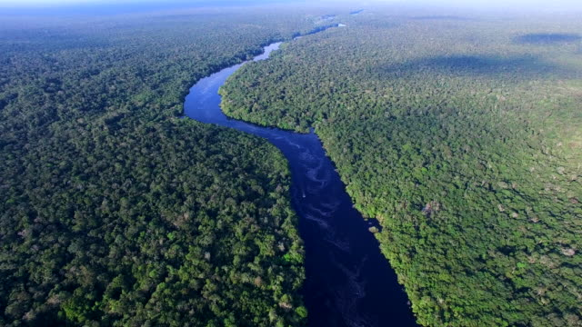amazon river in brazil - rainforest stock videos & royalty-free footage