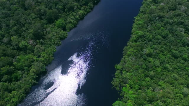 amazon river in brazil - amazonas state brazil stock videos and b-roll footage