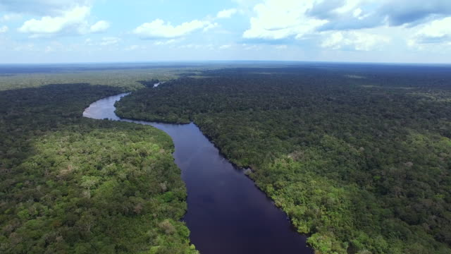 amazon river - amazonas state brazil stock videos and b-roll footage
