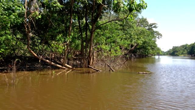 amazon - amazon region stock videos & royalty-free footage