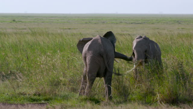 Amboseli & Just Outside