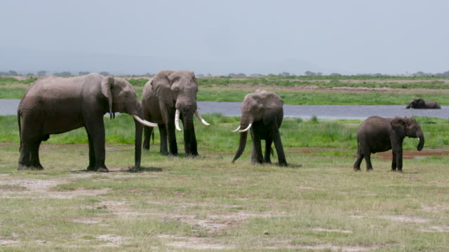 amboseli - cinque animali video stock e b–roll