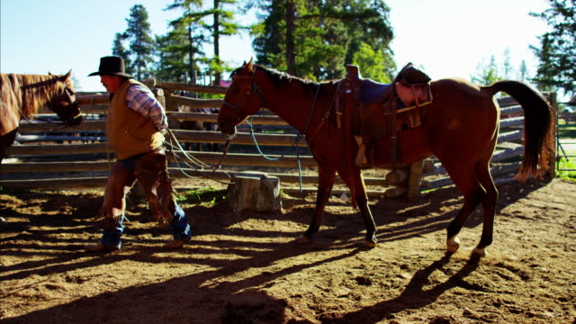 american cowboy in corral with horse wild west - bridle stock videos & royalty-free footage