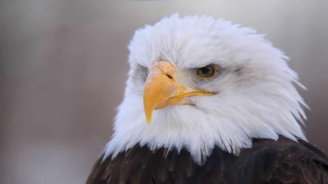 american eagle primer plano