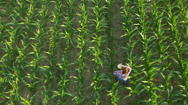 AERIAL American farmer checking sprinklers in the field