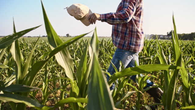 slo mo american farmer in the field of corn - plaid shirt stock videos & royalty-free footage