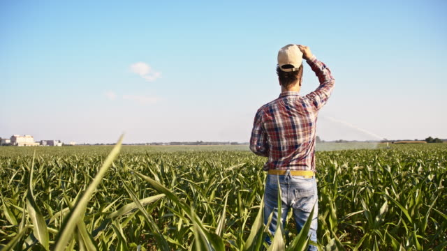 slo mo american farmer in the field - plaid shirt stock videos & royalty-free footage