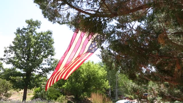 American flag attached to juniper tree