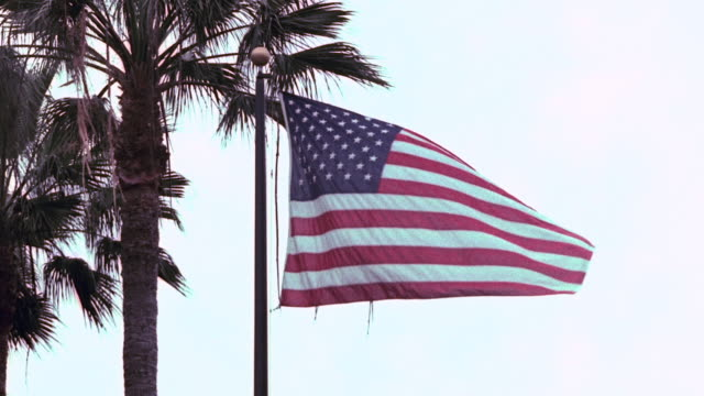 stockvideo's en b-roll-footage met shaky american flag flying on vertical flagpole beside palm trees, with colors flashing unnaturally to shades of green / santa monica, california, united states - varenblad