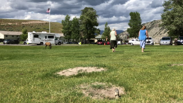 American flag, traffic and ground squirrels